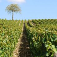 Annulation – ADH Bourgogne-Franche-Comté: rencontre œnologique et conviviale le jeudi 1er octobre 2020