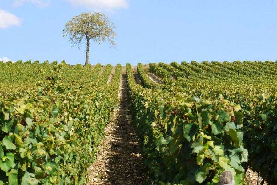 ADH Bourgogne-Franche-Comté: rencontre œnologique et conviviale le jeudi 1er octobre 2020